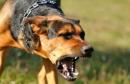 chien-enragé  كلب