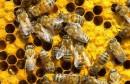 killer-bees-900x440