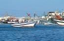 صيد-بحري-640x334
