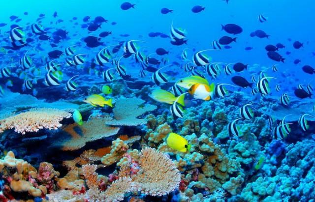 corals barrage  المرجان