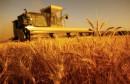 agriculture  فلاحة قمح