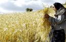 société-femme-rurale الريفية  المرأة