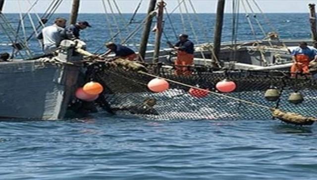 pecheur   صياد  سمك   poisson