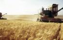 agriculture  فلاحة قمح  ble