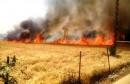 حريق قمح