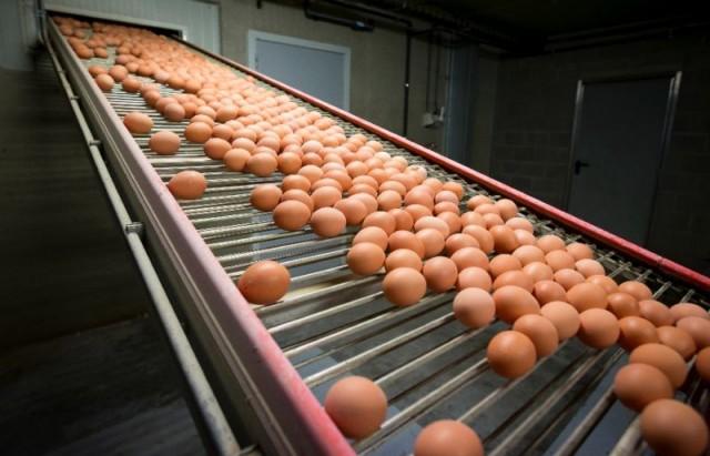 Europe's eggs