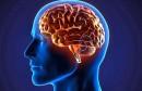 خلايا الدماغ cerveau