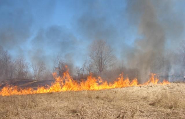 حريق في قمح