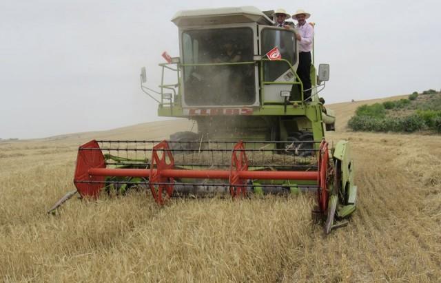 موسم الحصاد