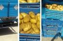حجز كمية 7 طن من مادة البطاطا