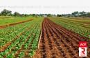 فلاحة agricole