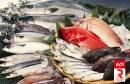سمك صيد بحري __poisson