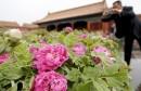 نبات جديد في الصين