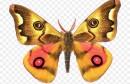 الفراشات الملكية على حافة الانقراض