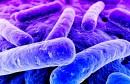 bacterie-gram-negatif-multiresistance-antibiotique