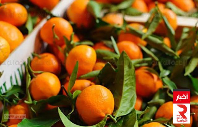 قوارص orange argumes
