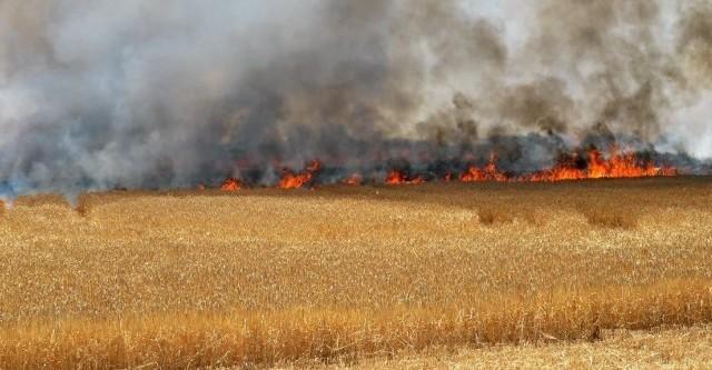 blé incendie kef