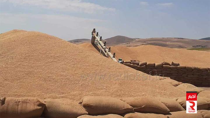 سليانة رفع 700 ألف قنطار من كميات الحبوب المجمعة في الهواء الطلق