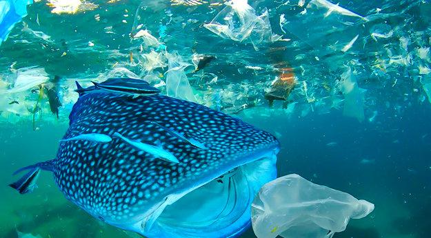 requin-baleine-plastique-wwf_xwh_1920x1281_xwh