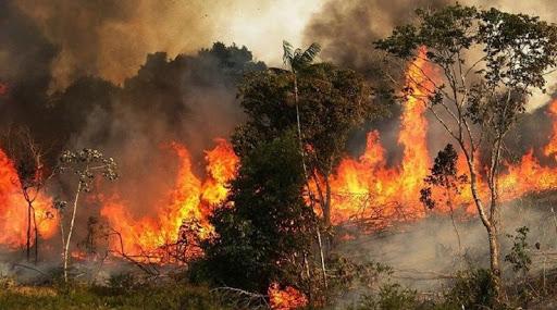 حريق شب في غابات غار الدماء