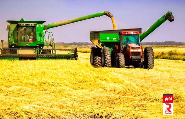 القمح الحبوب الحصاد ble