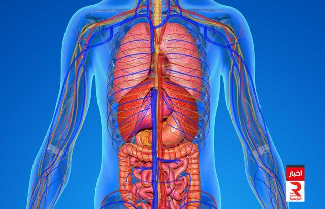 جسم الإنسان corps humain